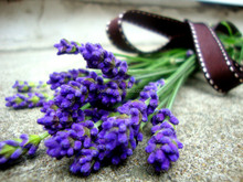 2016 New now uses for lavender oil for acne