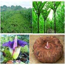 Herbal plant extract konnyaku powder