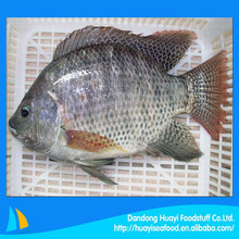 our best selling seafood product is frozen tilapia fish