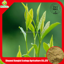 Promotion Price Green Tea Extract Powder with Good Quality Provided by Professional Manufacture
