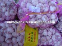 fresh red garlic for sale