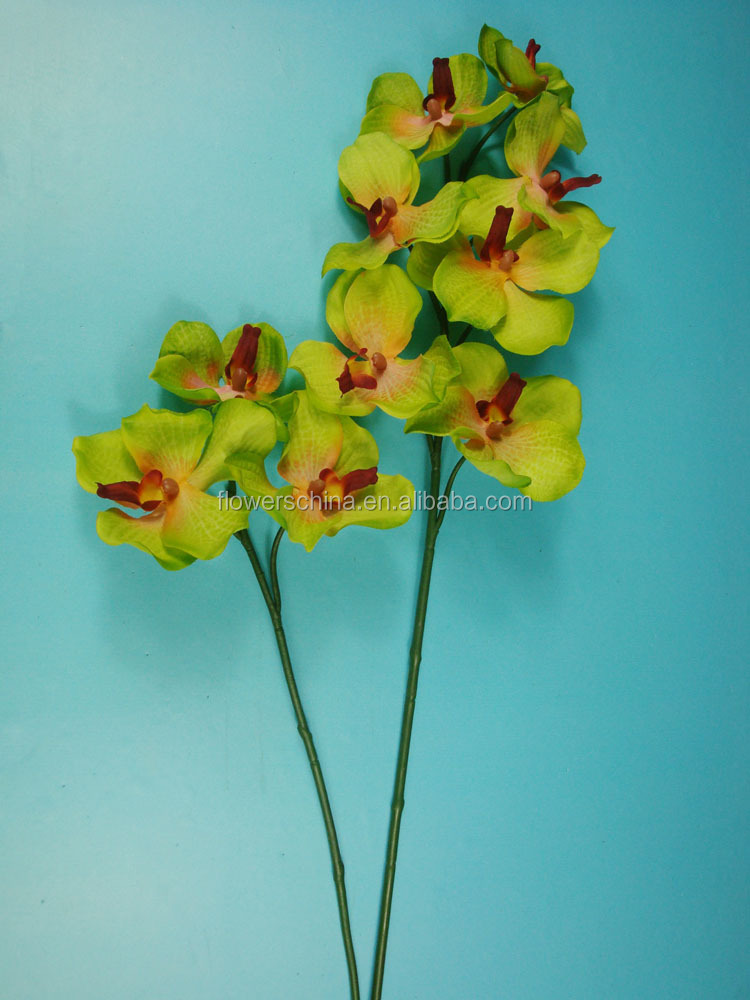 Orchids Wholesale Thailand Orchid Flower Thailand For