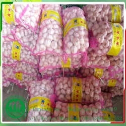 """china Best Wholesale Garlic """" - Supply In 40'' Reefer Container To More Than 66 Countries"""