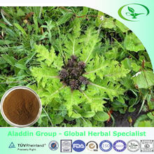 Natural Herbal Extract Costus Root Extract