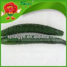 2015 HOTSALE pepino fresco vegetales verdes orgánicos saludable frutas