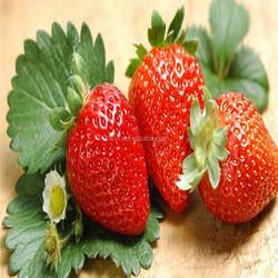 2015 Crop Frozen Strawberry From China Frozen Fruits Supplier