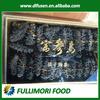 wild live sea cucumber