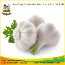 2015 high quality jinxiang manufacture fresh pure white garlic