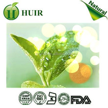 Manufacture supply Green Tea Extract organic green tea extract natural green tea extract