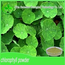 Venta clorofila polvo / polvo clorofila en stock
