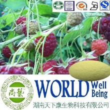Hot sale Raspberry extract/Raspberry ketone 99%/Natural ingredient plant extract