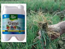 Chitosan Nematicide Liquid Agriculture Seaweed Fertilizer