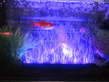 GAKO Free Shipping Factory Promotion Led Aquarium Light Best Penetration aquarium accessories for Tank Coral Marine Reef US/