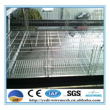 hot sale !! cheap price broiler chicks for sale/broiler chicks rate