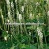 2.5%-5% Triterpene Glycosides Black Cohosh P.E