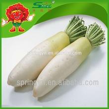 altopiano fresco ravanello bianco prezzo organico ravanello