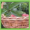 Natural materials and environmentally friendly wall mount fruit basket