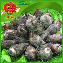 High quality fresh Chinese taro