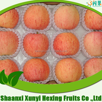 china red mature fuji apple supplier