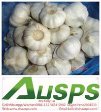 china farm fresh garlic