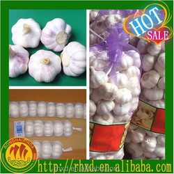 Fresh garlic/Fresh normal white garlic/Pure white garlic