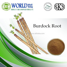 GMP Certificate Popular Herbal burdock root extract
