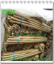 ZENT -32 Nature Dry Straight Farming Bamboo Poles for sales