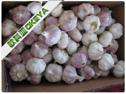 China Bulk Fresh Garlic,red and natural