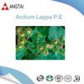Orgánica Arctium lappa l. / bardana extracto de semilla de polvo