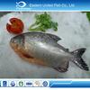 china seafood export farm fresh fish