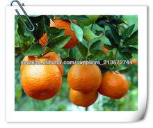 Chino naranja Ponkan sobre las ventas (2013)