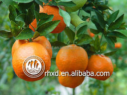 2015 citrus fruit factory directly, supply you differnt type and size