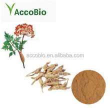 Top quality Angelica Extract,Dong Quai Extract powder/5:1 10:1 20:1