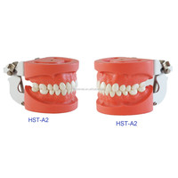 CE Approved!! Dental Study Model/Typodont/Dental Teeth Model