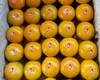 2015 Mandarin tangerines ponkan kino orange