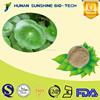 Good reputation supplier for Centella asiatica P.E. powder 10%/20%/40% Asiaticoside