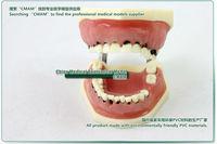 Товары для изучения медицины Self cmam] ,  Oral