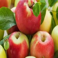 Apple Juice Concentrate naturel elite