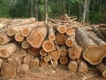 birch,okan,azobe and Eucalyptus round logs