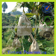 fruit protection bag mango