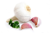 Chinese wholesale natural garlic for sale to importers