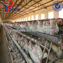 chicken egg laying equipment