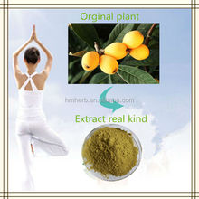 Factory supply 100% pure natural organic Loquat Leaf Extract