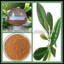 Free sample pure natural Green Tea Extract 95% EGCG by UV