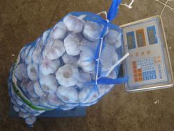 fresh garlic packed in 20kgs/mesh bag