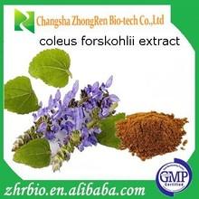 Hot sale Coleus Forskohlii root extract/Coleus Forskohlii extract/forskolin 10%/Anti-hypertensive plant extract