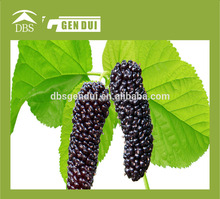 Frozen Mulberry wholesale frozen iqf mulberry fruit price wholesale frozen iqf mulberry fruit price