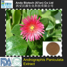 Factory Supply Top Grade Herb Medicine Common Andrographis Herb Extract