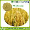 /product-gs/gmp-manufacture-organic-wheat-extract-60112673637.html