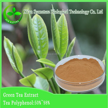 best quality and competitive price green tea extract hot selling